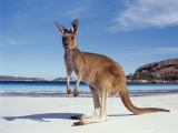 5 Amazing Australian Holiday Ideas