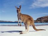 5 Amazing Australian Holiday Ideas