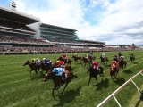 Experience the Excitement of a Day at the Races