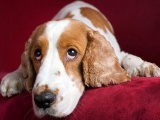 Prozac for Dogs: An Effective Psychotropic
